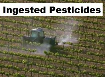 pesticide on food and in the body