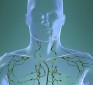 The lymphatic system – How it works and why cleansing it matters