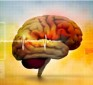Fit Body, Fit Brain: The Key to Keeping Your Mind Young