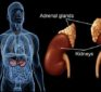 Dr. Berg explains adrenal fatigue and all of its symptoms.
