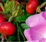 The Benefits of Vitamin C With Rose Hips for Skin Tone