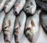 Is Fish Safe to Eat After Fukushima?