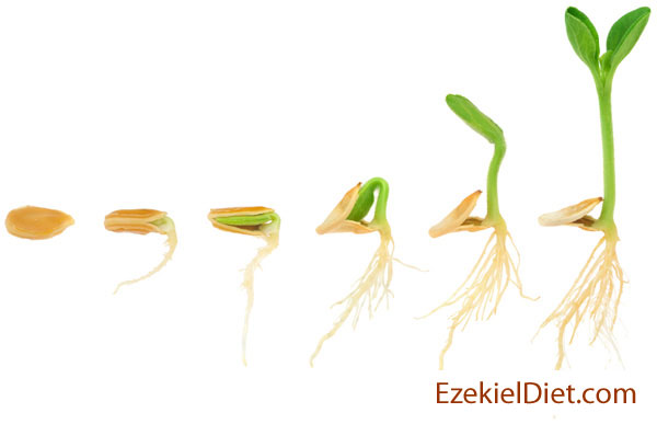 sprouting-seed