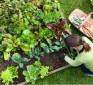 Learn how to plant a high-yield secret survival garden