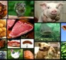 God's Dietary Laws: Abolished in the New Testament?