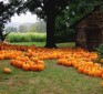 Health benefits of pumpkins: Cancer-fighting, wound healing and skin-protecting