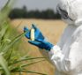New multi-toxin GMOs that produce their own poison carry 'serious health and environmental risks' scientific review finds