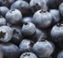 Scientific proof that blueberries support weight loss