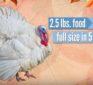 The Origin of Thanksgiving Foods & Today's Lab Coat GMO Bigger Better Tastier Versions